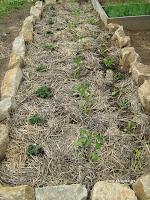 Φτιάχνω παρτέρια για καλλιέργεια λαχανικών