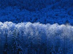 รูปต้นไม้เมืองหนาว