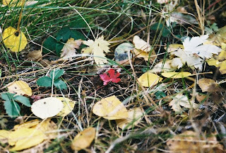 Photo of Leaves in the Grass