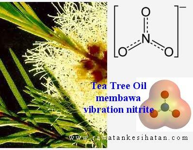 Tea Trea menyamai vibration nitrite
