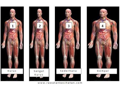 Sistem log dan hubungannya dengan saiz tubuh