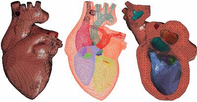 FEM organ Jantung