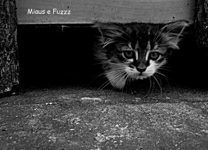 Miaus e Fuzzz