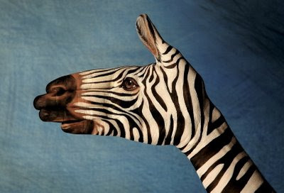 Zebra Face Optical Illusion