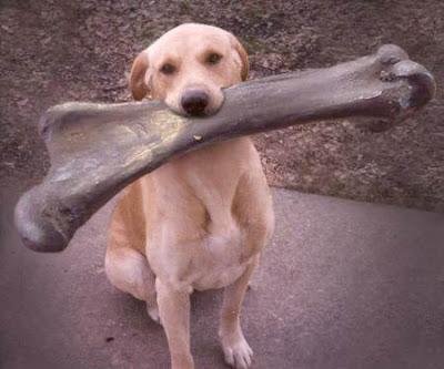 tulang / bone