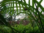 the tropical look i achieved in 'hansadhwani'