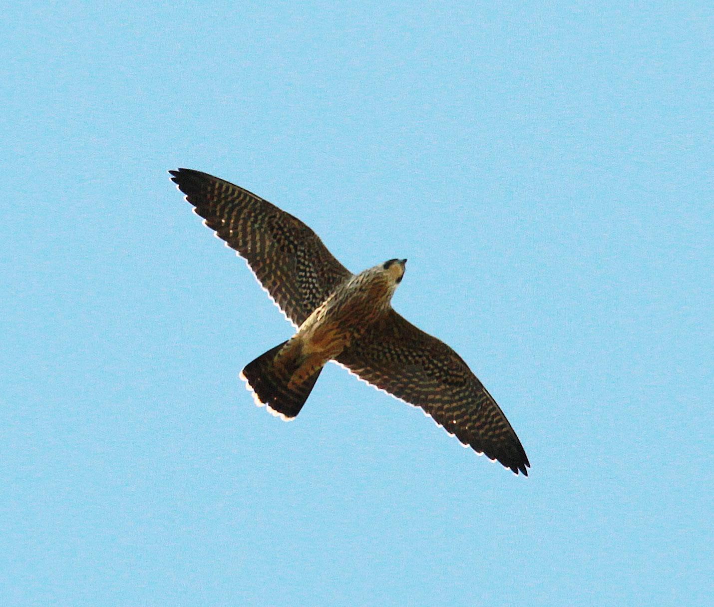 Surner Birding: Hampshire Bird Club