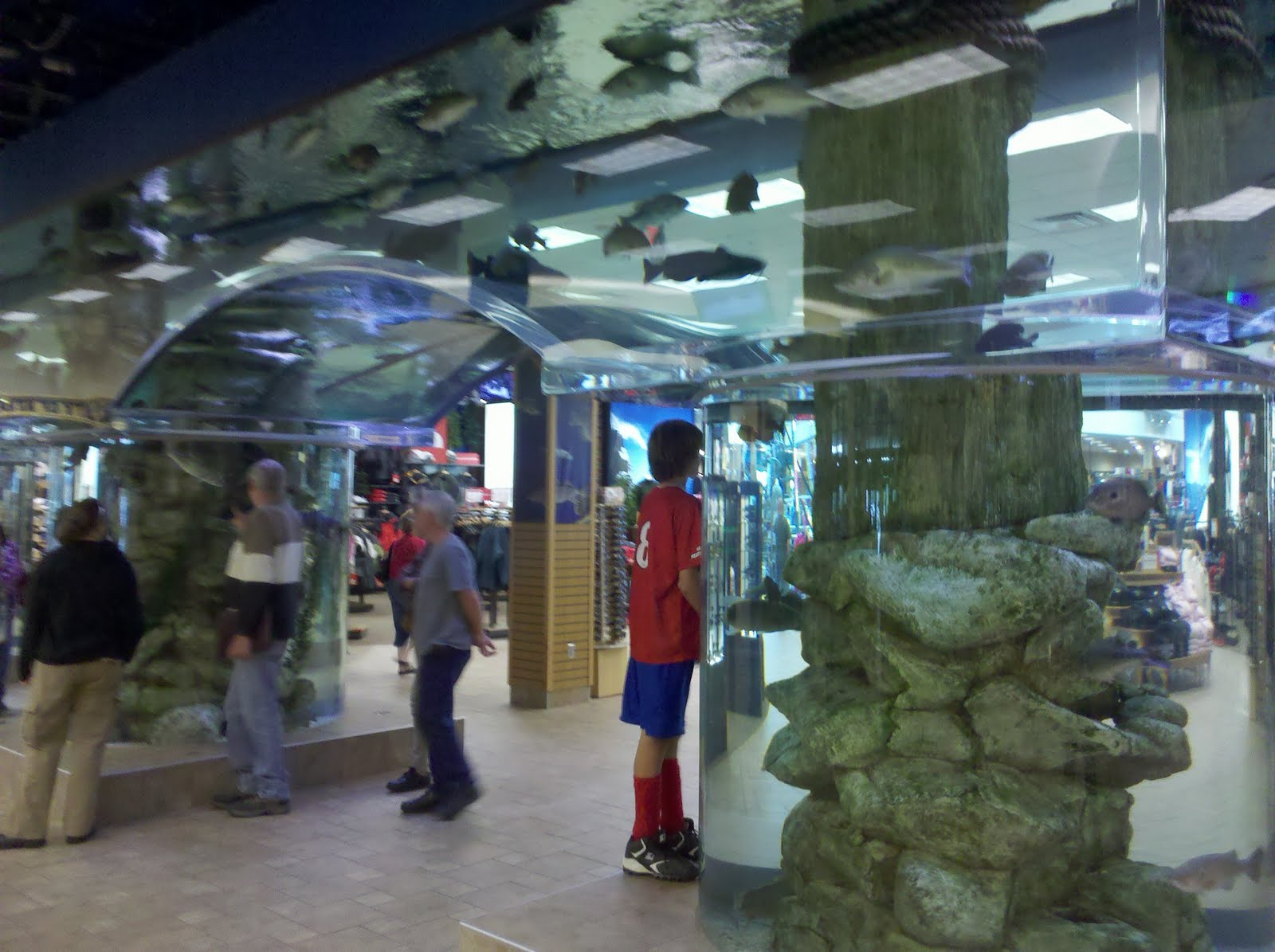 aquarium store reno 220 000 square foot scheels store to