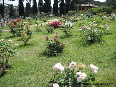 nyc/caribbean ragazza: Roseto Comunale, Rome\'s Rose Garden