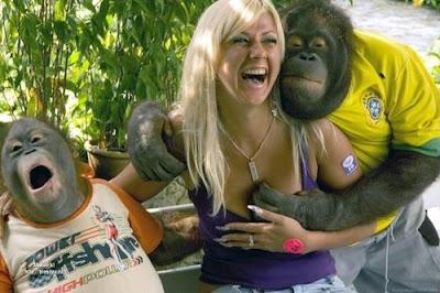 macaco assanhado