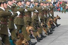 perros policías amestrados por unidad femenina en Chile