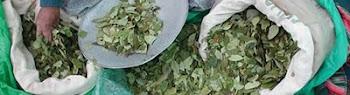 las conexiones de Bolivia con los sitios del mundo donde llega la cocaína