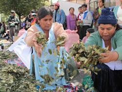 haciendo demostraciones y masticando coca que luego arrojan al desecho cocaleras en La Paz