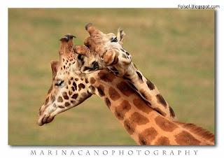funny animal friendship wallpaper