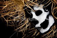 halloween evil skeleton