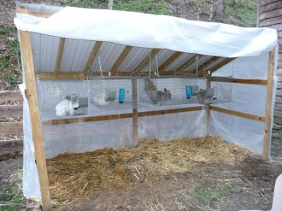 how to set up a rabbit cage outside