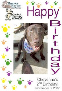 Cheyenne's Doggy Birthday Picture