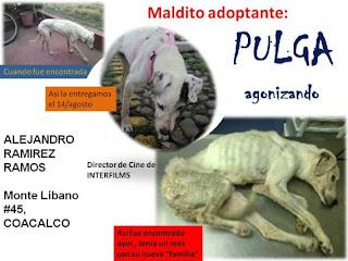 Pulguita murió