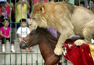 ataques animales