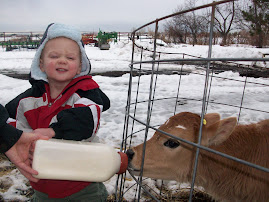 Jack feeding calves