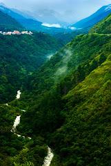La ruta del té... en Venezuela