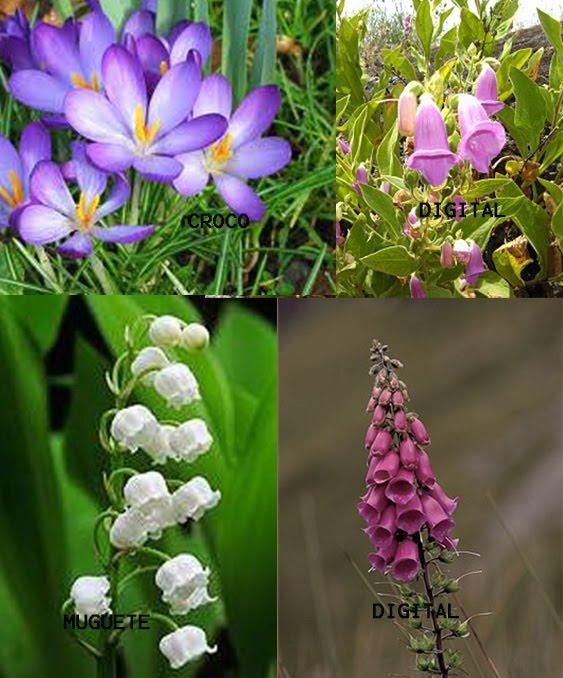 Venenos en el jard n for Planta venenosa decorativa
