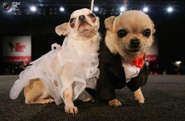 Cerita binatang lucu - cerita anjing menguasai bumi