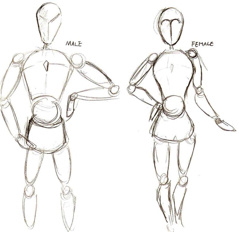 Basics Of Character Design : Mu li animation d dummy character modeling