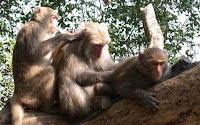 monkey chat
