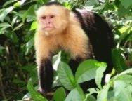 monkey missin