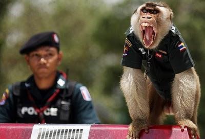 monkey police
