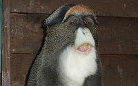 george monkey