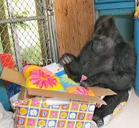 koko gorilla birthday