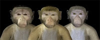 monkeys virtual