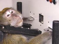 monkeys on cocaine