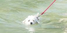 Lola nage