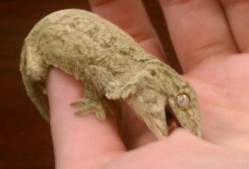 So my new leachianus gecko is a Pine Isle x Super Nuu Ana mix. Both ...