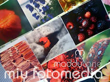 Photostock ~ by Maddylane Photography
