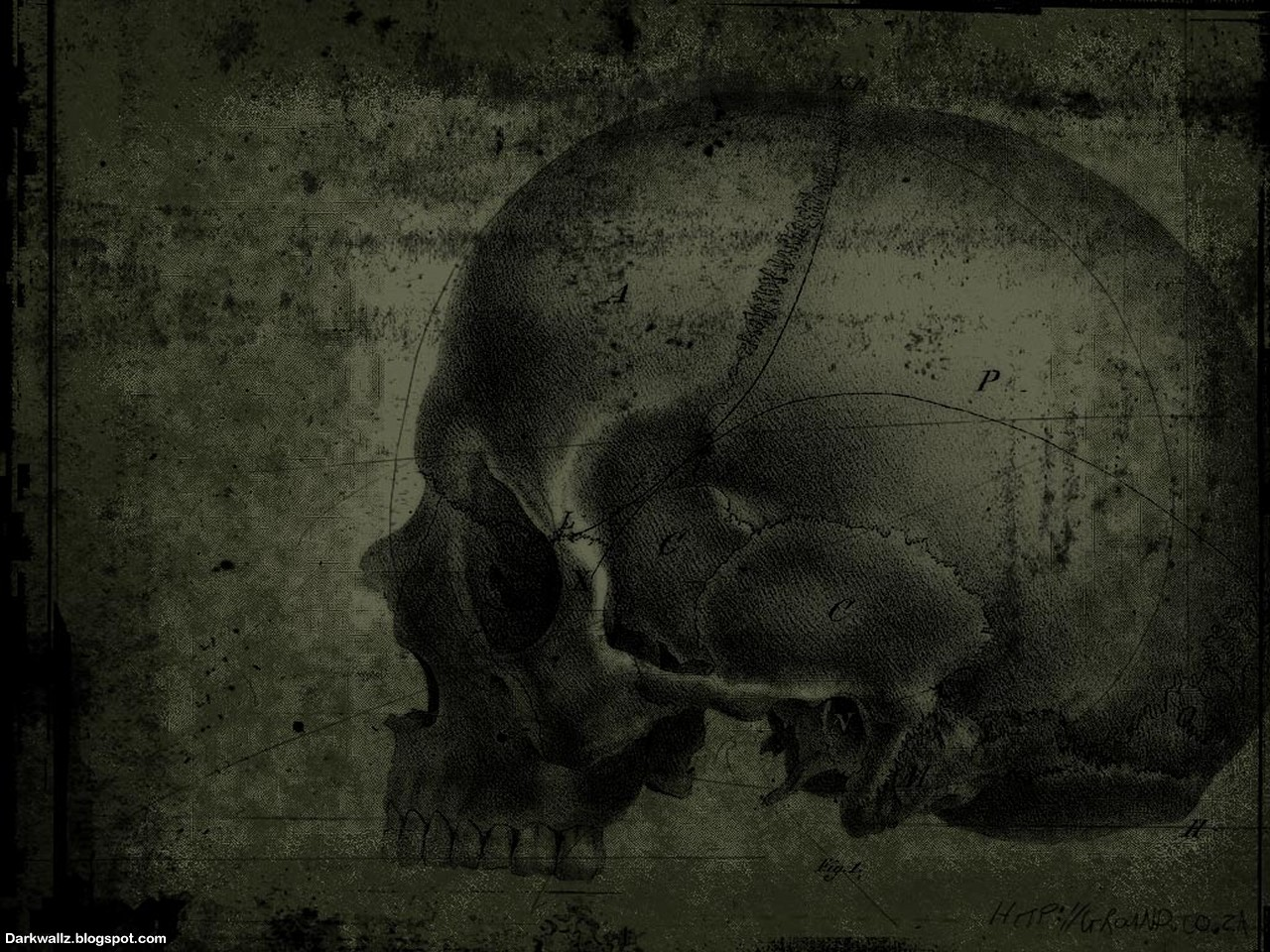 Skulls Wallpapers 43 | Dark Wallpaper Download
