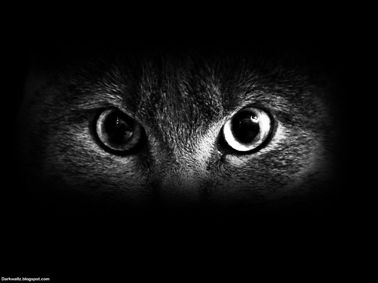 Scary Eyes Wallpapers 23 | Dark Wallpaper Download