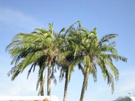 Florida February 2009