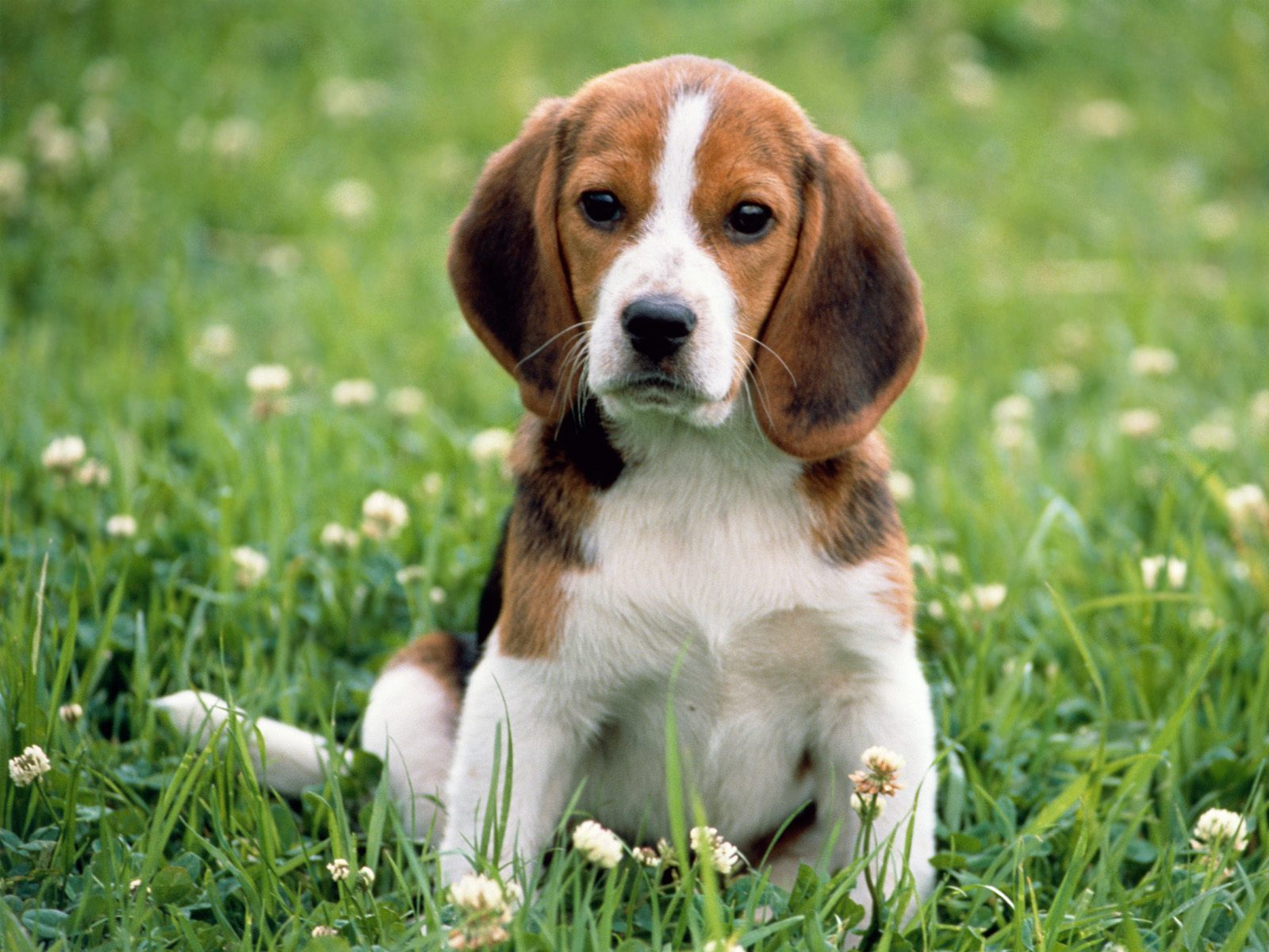 Pictures For Everyone No Trash Big Dogs Little Puppies