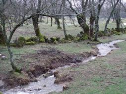 Arroyos en Hoyo