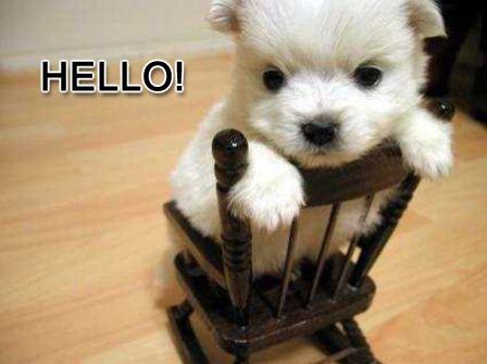 http://4.bp.blogspot.com/_-oqXZQGbtUc/TCxznBtBOkI/AAAAAAAAAUU/dMcYCH6NJVw/s1600/cute_hello.jpg