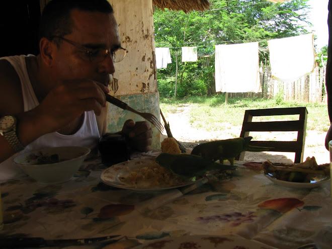 El loro que se comio mi arroz