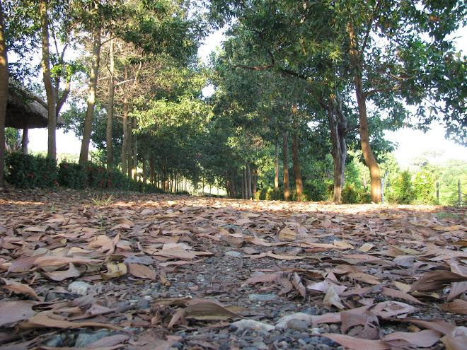 Tierra Buena en Córdoba