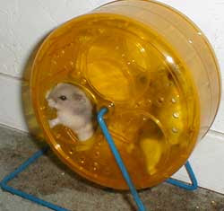 Hamsters rock!