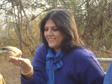 Indian Tree Pie in Ranthambhore National Park, January 2009