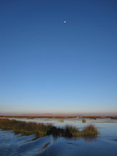 Schilf Mond Titicacasee