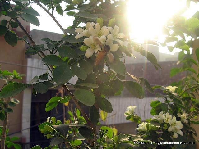 butterfly like marva flower